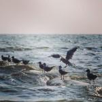 Внимание!  Ожидается подъем уровня моря