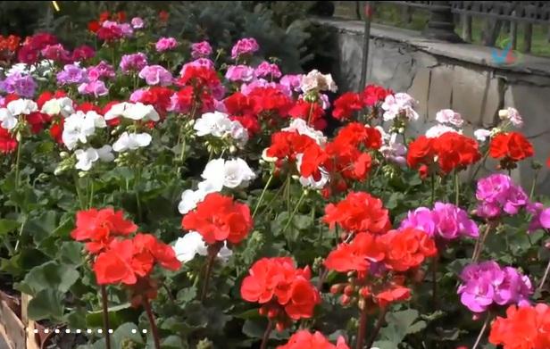 южный сад таганрог